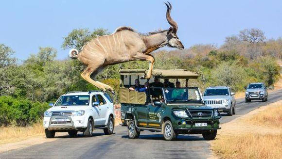 Antilopa și săritura în cer – o fotografie la o mie