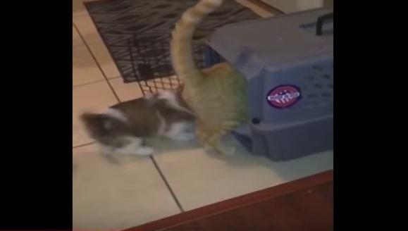Cățelușul diabolic: te închid în cușcă, pisică ignorantă! – VIDEO