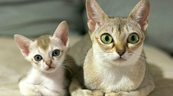 11 pisici cu mini-copii perfecte – FOTO