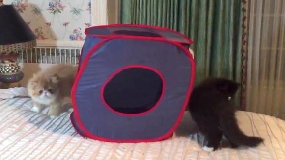 Pisicuţele jucăuşe au primit o nouă jucărie. Reacţia lor – VIDEO