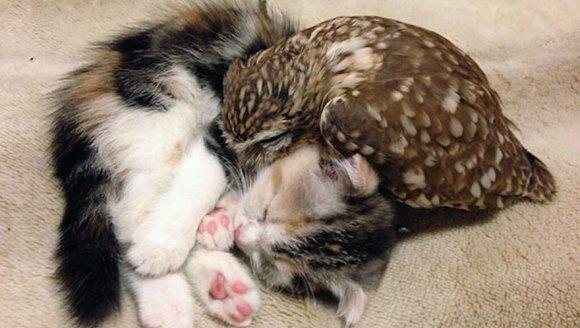 Imagini adorabile: Pisicuţa Marimo şi bufniţa Fuku, iubesc să doarmă împreună