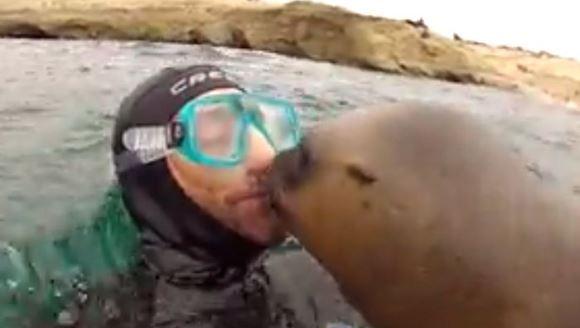 """''Vreau doar un sărut""""! Leul de mare mare care tot încearcă să sărute pe gură un scafandru – VIDEO"""