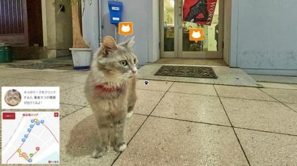 Japonezii au dezvoltat aplicaţia Google Street View, cu imagini din perspectiva unei pisici