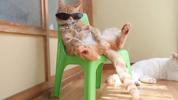 S-o simţi bine cea mai cool pisică din lume? VIDEO