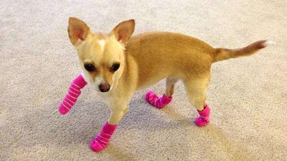 Căţelul-încălţat! 11 câini în şosete, care te vor binedispune
