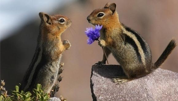 13 momente amuzante în care animalele ne-au imitat ciudata viață amoroasă