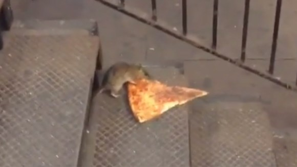 Viral: Ce face un şobolan cu o felie de pizza
