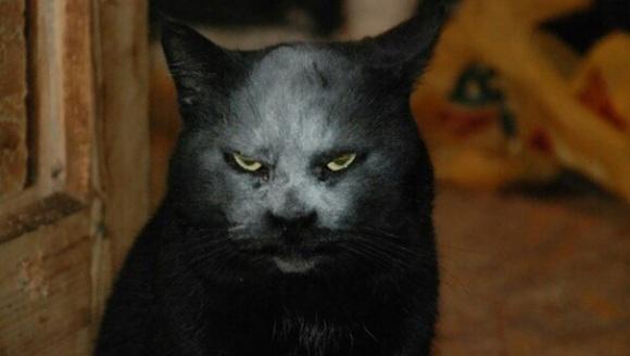 Pisicuță comparată cu un diavol, după ce a căzut cu capul în făină - Galerie Foto