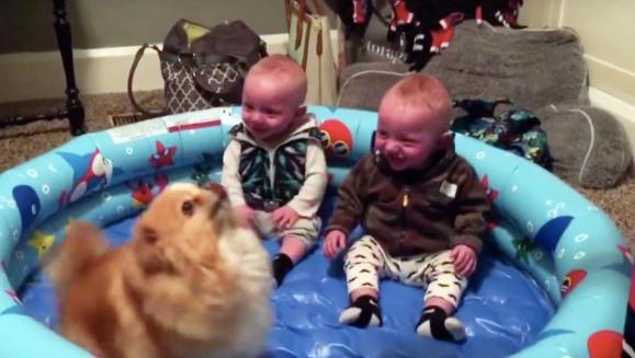 Gemenii râd incontrolabil de pomerianul lor. Ce face micuţul patruped? VIDEO
