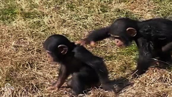 Viața alături de frați, în imagini hazlii – VIDEO