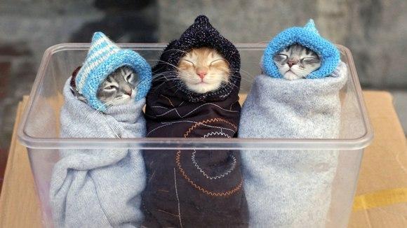 Poze memorabile cu pisici, care te vor face râzi cu fiecare ocazie - Galerie Foto