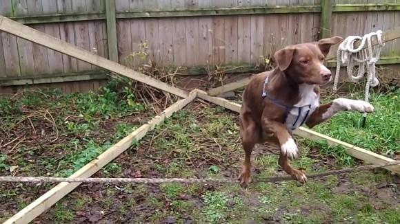 Câinele acesta chiar are talent! Face ceea ce doar cascadorii pot – VIDEO