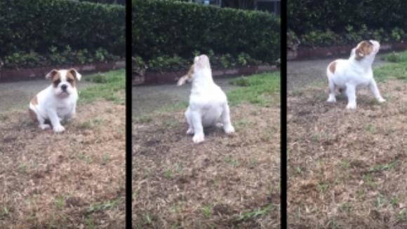 Reacţia unui căţeluş, când vede pentru prima dată picături de ploaie – VIDEO