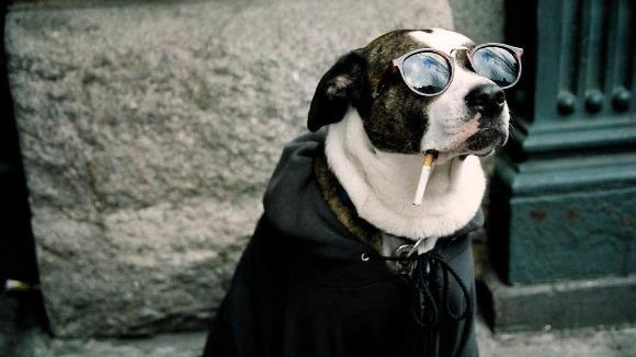 """""""Hai, fă paşi!"""" 14 animale care nu suportă prezenţa nimănui – Foto şi VIDEO"""