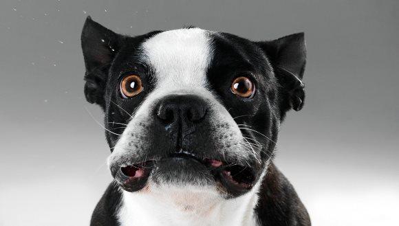Când câinii sunt induşi în eroare de pisici… Foto şi VIDEO