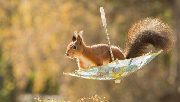 Omul care trăiește din fotografiile cu veverițe – Galerie foto superbă