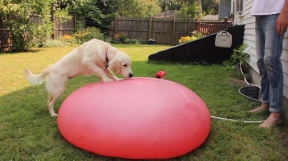 Când un câine confuz sparge un balon gigant plin cu apă, în slow-motion – VIDEO