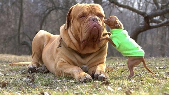 15 câini atât de mari, încât nu îţi va veni să crezi că sunt reali – Galerie Foto
