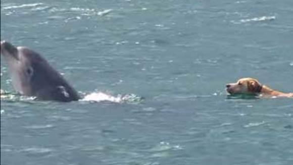 Reacţia surpinzătoare a unui câine, când vede pentru prima dată delfini – VIDEO