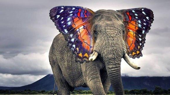 Despre struţocămile… sau alte animale hibrid, modificate în PhotoShop