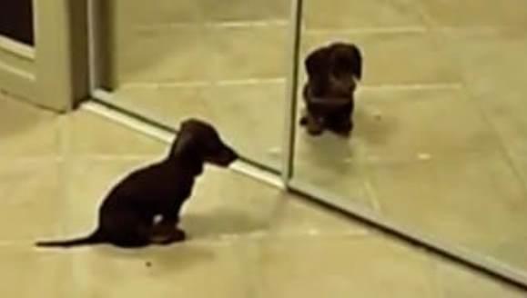 Căţeluş indus în eroare de o oglindă – VIDEO