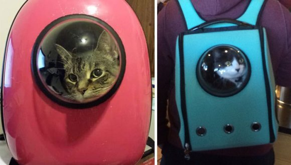 Ghiozdanele care parcă le trimit pe pisici în spaţiu - Galerie Foto