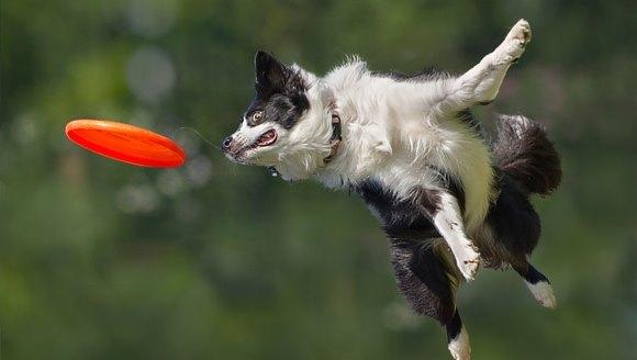 Câini zburători?! Există! Dovada – cea mai tare galerie foto!