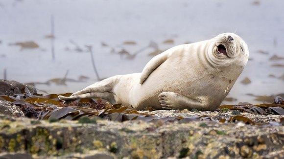 Cele mai amuzante fotografii cu animale au fost premiate. Care este câştigătoarea din 2015 - Galerie Foto