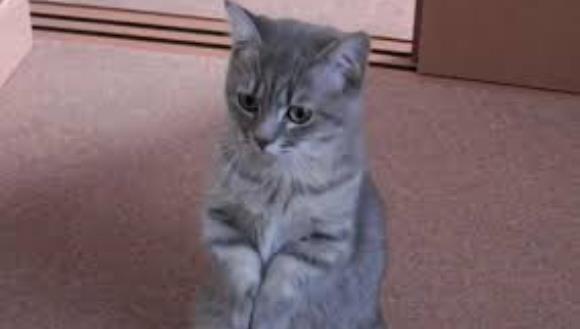 O pisicuţă cere mâncare într-un mod adorabil! Trebuie să vezi, ca să crezi – VIDEO