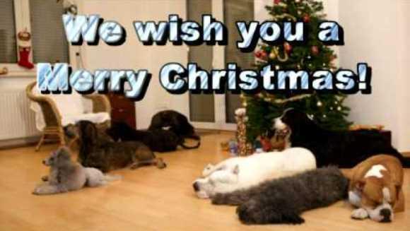 Opt câini reuşesc să pună la cale cea mai frumoasă surpriză de Crăciun – VIDEO