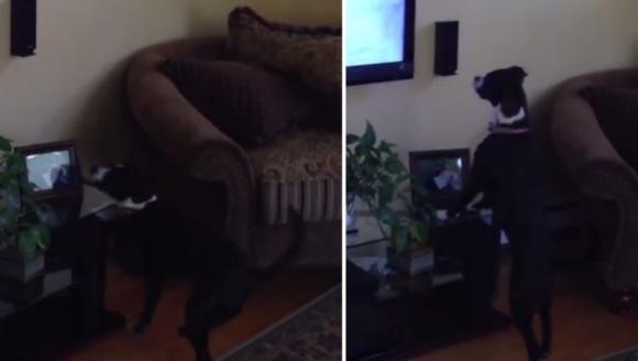 Felul în care se distrează acest câine în faţa televizorului te va face să râzi cu lacrimi – VIDEO