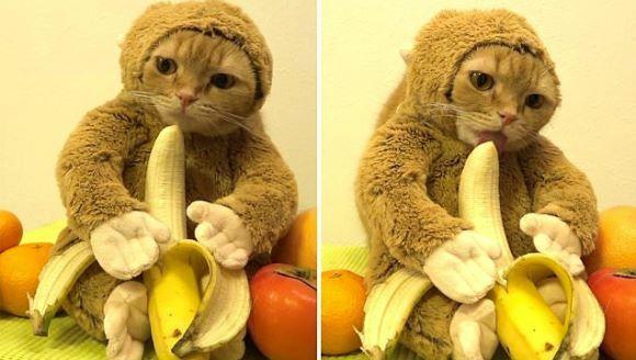 2016 este anul Maimuţei, iar această pisică s-a pregătit pentru asta – VIDEO