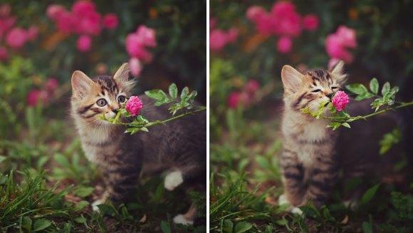 Cele mai drăguţe imagini dintotdeauna: animale mirosind flori – Galerie foto