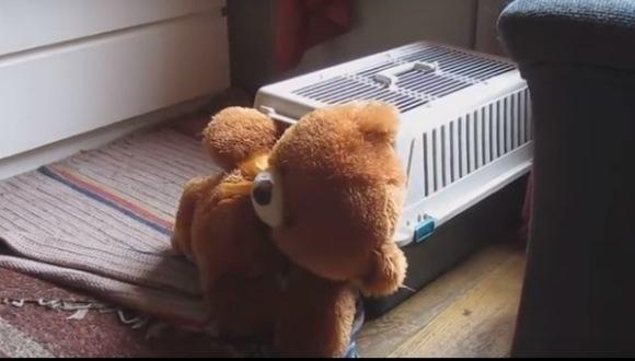 Un căţeluş iubeşte atât de tare un urs de pluş, că îl înghesuie în cuşca lui – VIDEO