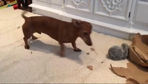 Cum învaţă un câine să iubească o jucărie nouă – VIDEO