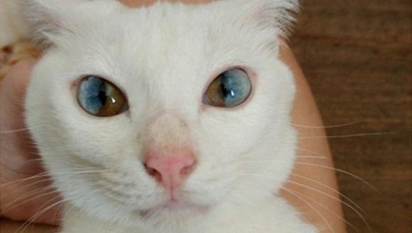 Pisica aceasta ascunde un întreg univers în ochii ei - Galerie Foto