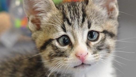 Faceţi cunoştinţă cu Bum, pisicuţa permanent îngrijorată, celebră acum în toată lumea - Galerie Foto
