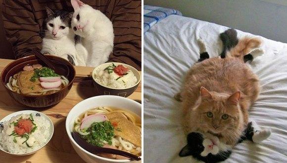 Ziua Îndrăgostiţilor: cum şi-au arătat pisicile tandreţea, pe 14 februarie - Galerie Foto