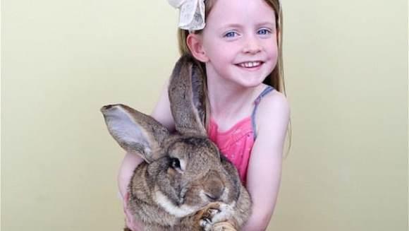 Se caută părinţi adoptivi pentru un iepure gigant - Galerie Foto