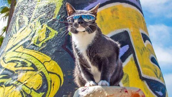 O pisică, obligată să poarte permanent ochelari de soare. Care este motivul - Galerie Foto