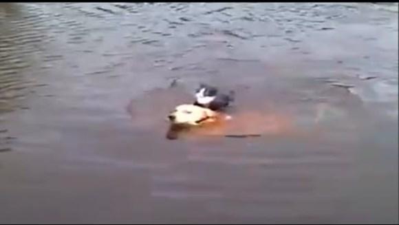 Incredibil, dar adevărat! Un câine salvează o pisică de la moarte – VIDEO