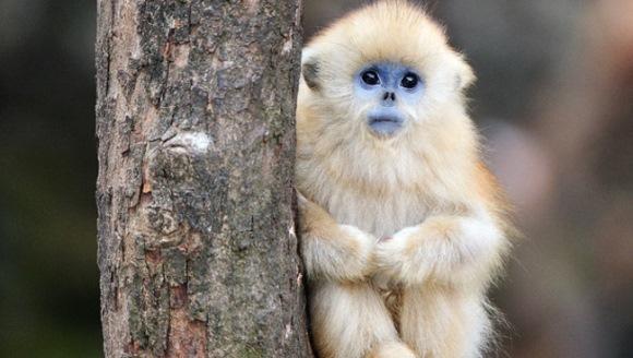 Cei mai adorabili pui de maimuţă din lume sunt chiar aici - Galerie Foto