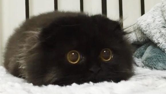Faceţi cunoştinţă cu Gimo, pisicuţa cu cei mai mari ochi din lume - Galerie Foto