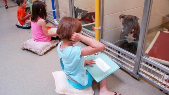Experiment inedit: copiii le citesc poveşti câinilor din adăposturi, pentru a-i calma – Foto şi Video
