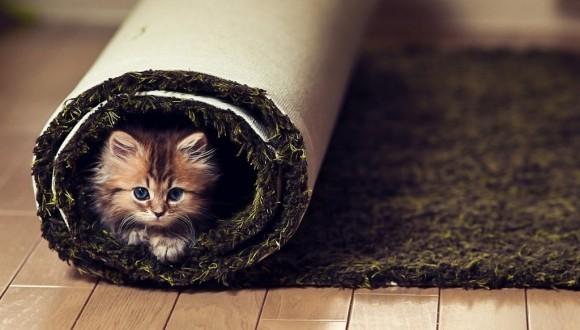 14 locuri în care nu te-ai gândi sub nicio formă să îți cauți pisica - Galerie Foto