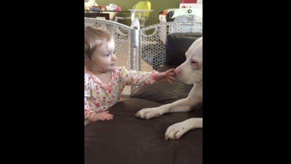 O fetiță drăgălașă împărtășește o relație deosebită cu pitbullul ei surd – VIDEO