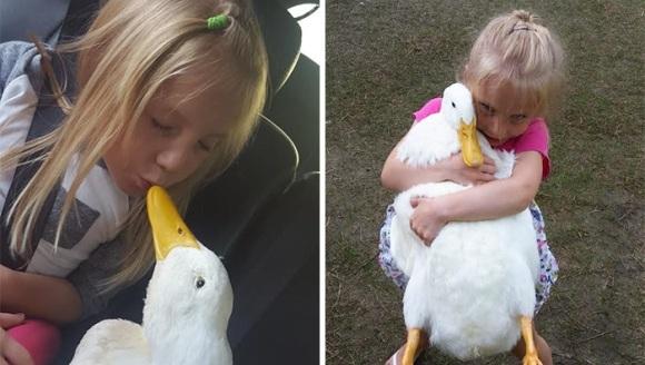 Prietenie uimitoare dintre o fetiță și o rățușcă. Fetele sunt de nedespărțit - Galerie Foto și VIDEO