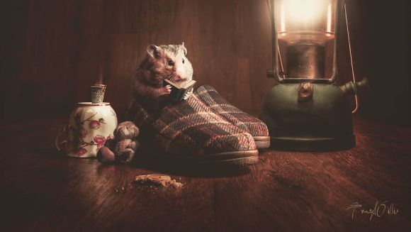 Cele mai tari fotografii suprarealiste cu animale, realizate în Photoshop - Galerie foto