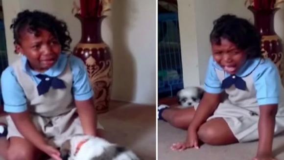 Cele mai tari reacții ale oamenilor care primesc cadou cățeluși – VIDEO