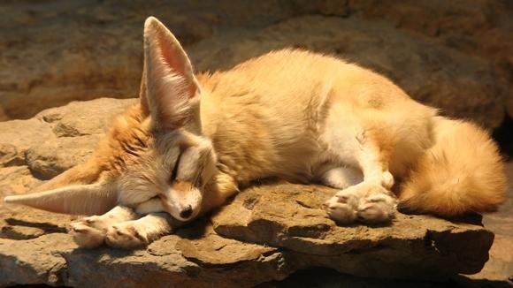 18 animale somnoroase, lovite de astenia de primăvară – Galerie Foto
